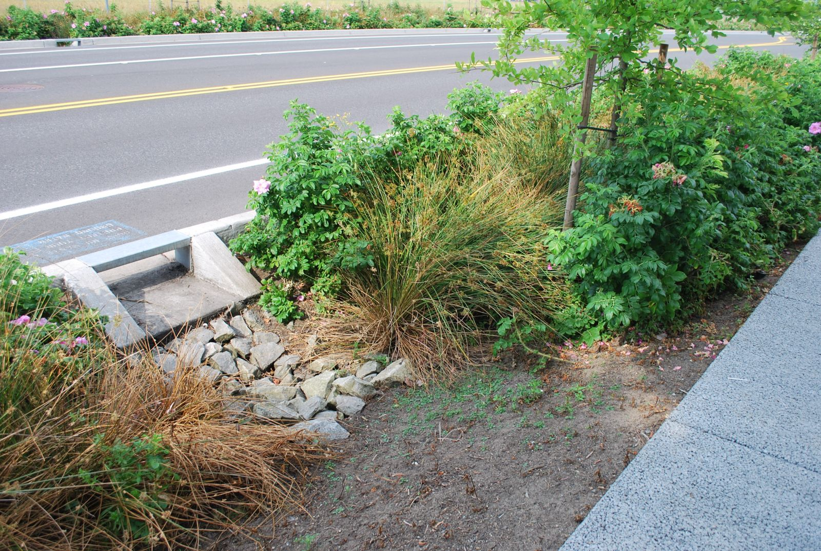 Northeast 99th Street rain garden